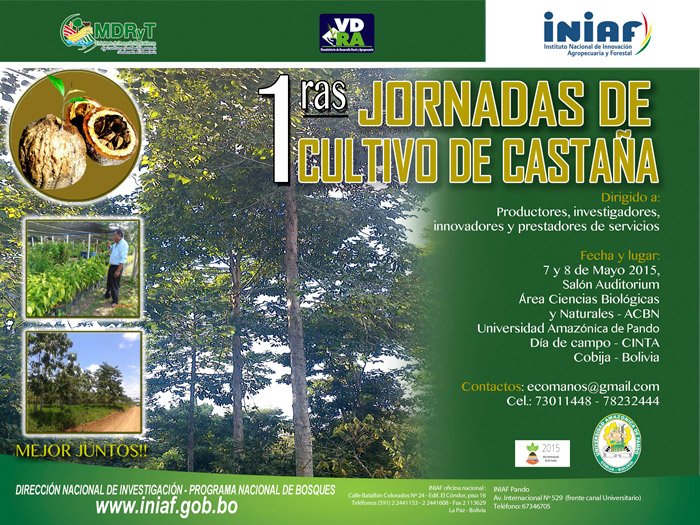 El cultivo y domesticación de la castaña: Innovación forestal en marcha