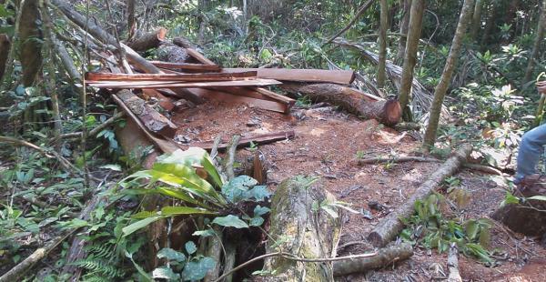 Deforestacion en Bolivia, Amazonía