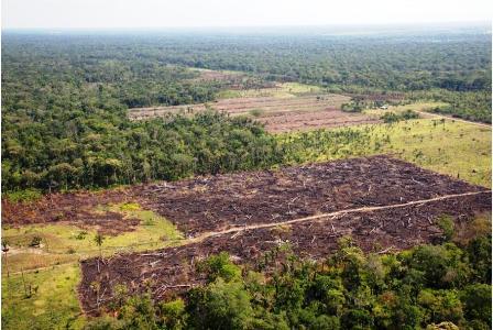 Ref. Fotografia: Devastado. Este panorama ya es común en toda la Reserva Forestal donde hay ausencia total del Estado y las instancias subnacionales.
