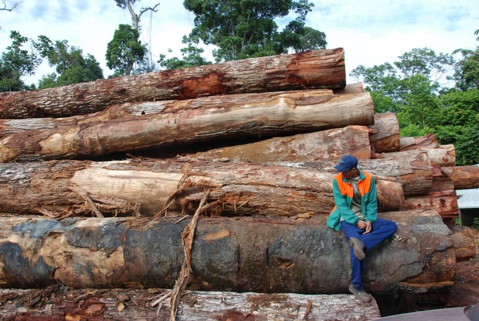 Madera talada en la Amazonia brasileña. Jos Barlow