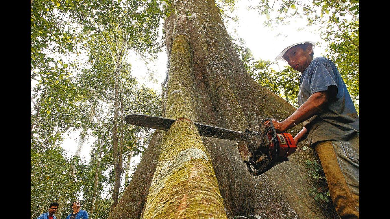 El sector espera superar la producción forestal, que en la gestión pasada llegó a 1,3 millones de metros cúbicos . Foto: El Deber