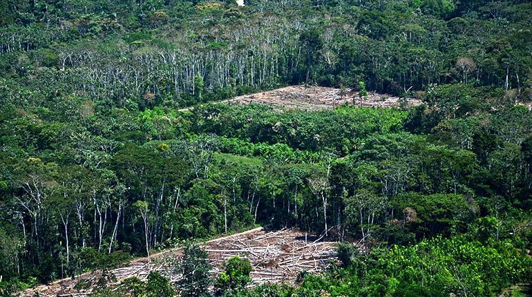 Deforestación en el Tipnis. | José Rocha