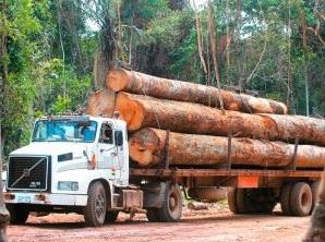 Denuncia de Unidad Demócrata: Exdiputado del MAS implicado en explotación ilegal de madera