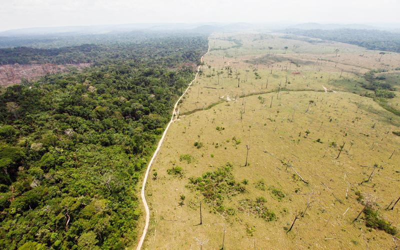 Foto: Alerta por deforestacion en Paraguay. radio.uchile.cl
