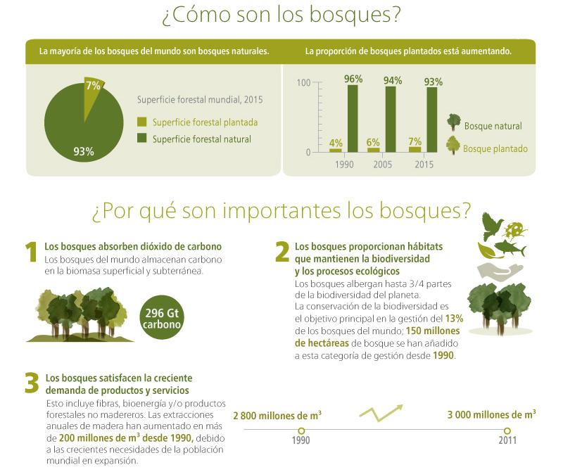 Evaluación de los recursos forestales mundiales 2015 - ¿Cómo están cambiando los bosques del mundo?. Infografia - Parte 2