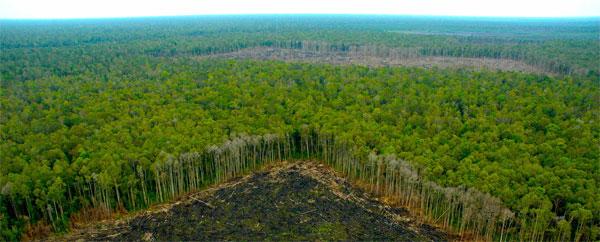 La tala de impacto reducido aún daña la biodiversidad en los bosques lluviosos tropicales