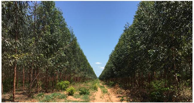 Para promover plantaciones forestales, la CFB y ABT visitan proyecto. Foto: CFB
