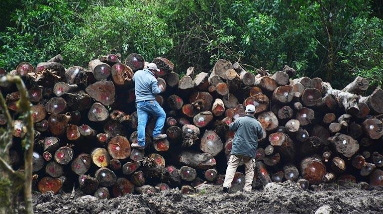 Una imagen ilustrativa de la producción forestal en Bolivia. | CARLOS LÓPEZ
