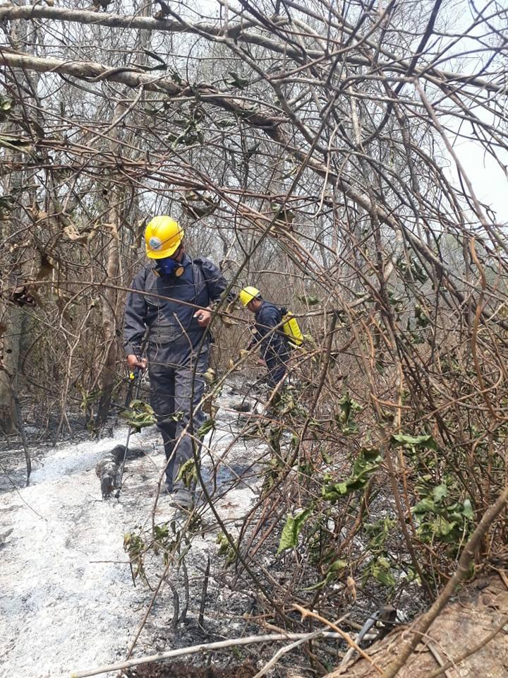 Guardaparques del Parque Kaa Iya y personal del Municipio de San José de Chiquitos rescatan animales silvestres en la zona afectada por incendios. El Ministerio de medio Ambiente y Agua desplaza brigadas que protección y rescate de fauna silvestre.