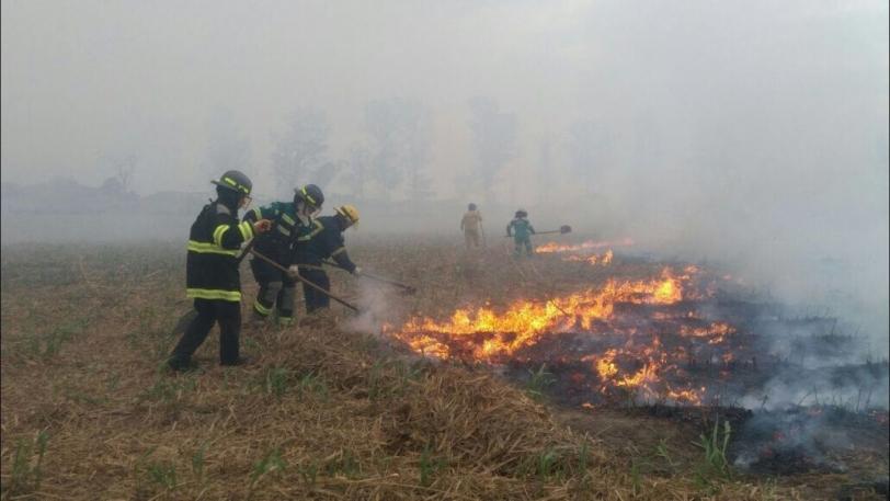 Número de focos de quema se redujo un 42%