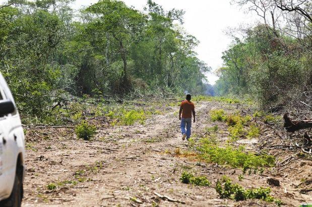 Los que formaron la comunidad de Tupac Amaru también tumbaron árboles para construir un camino ancho que mide tres km de largo.