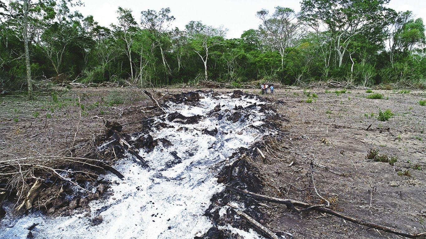El bosque tropical mejor conservado ya está enfermo