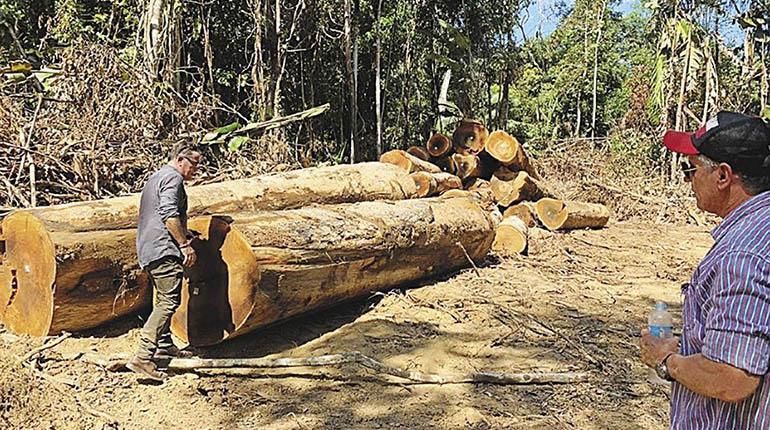 La Cámara Forestal de Bolivia (CFB) propuso al Gobierno nacional la creación de un fondo de reactivación económica de 700 millones de dólares que permitan la reactivación de este sector para incrementar la producción de 1,3 millones a 5 millones de metros cúbicos (m3) de madera por año