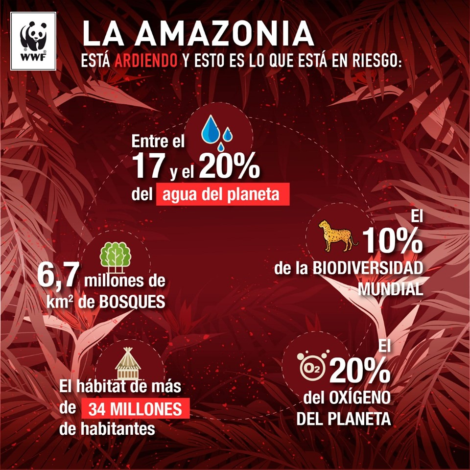 WWF expresa su seria preocupación por la propagación de incendios en la Amazonía, que amenazan la existencia del bosque tropical más grande del mundo, hogar de más de 34 millones de personas, incluyendo alrededor de 500 pueblos indígenas y hábitat de miles de animales y plantas.