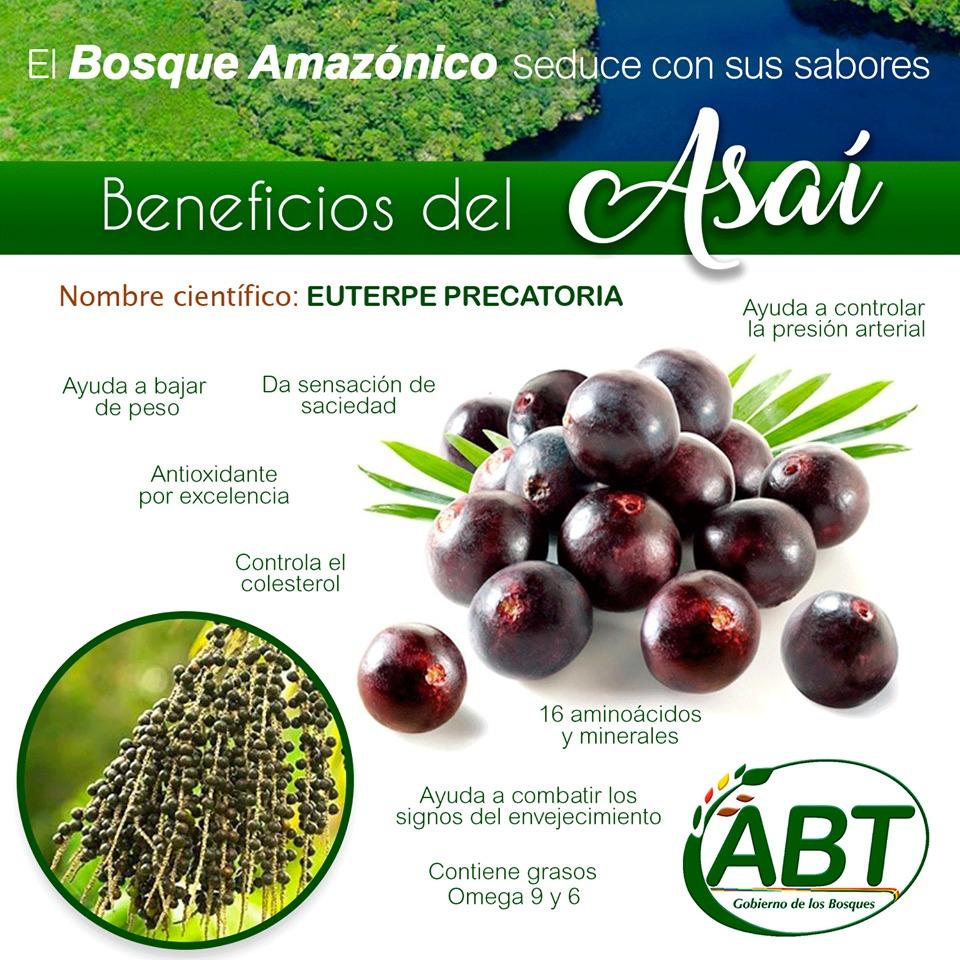 El Asaí es un fruto de palmera nativa y existen 3 especies en Bolivia. La más conocida es la Euterpe Precatoria.
