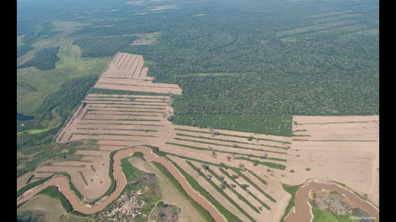 Bolivia perdió 10 mil kilómetros cuadrados de bosque en 13 años
