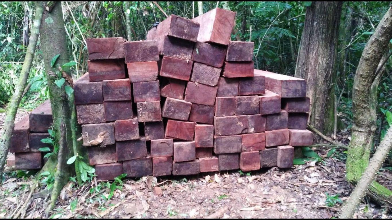 Vecinos de comunidades de Yapacaní, que forman parte del parque Nacional Amboró, encontraron a los madereros y los denunciaron. Un operativo interinstitucional permitió recuperar la madera