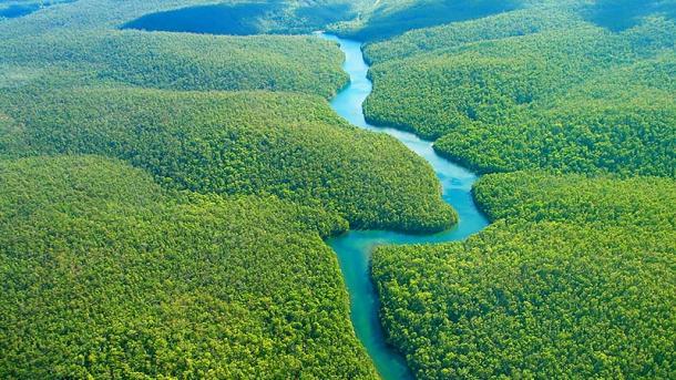 El proyecto prevé plantar un total de 73 millones de árboles