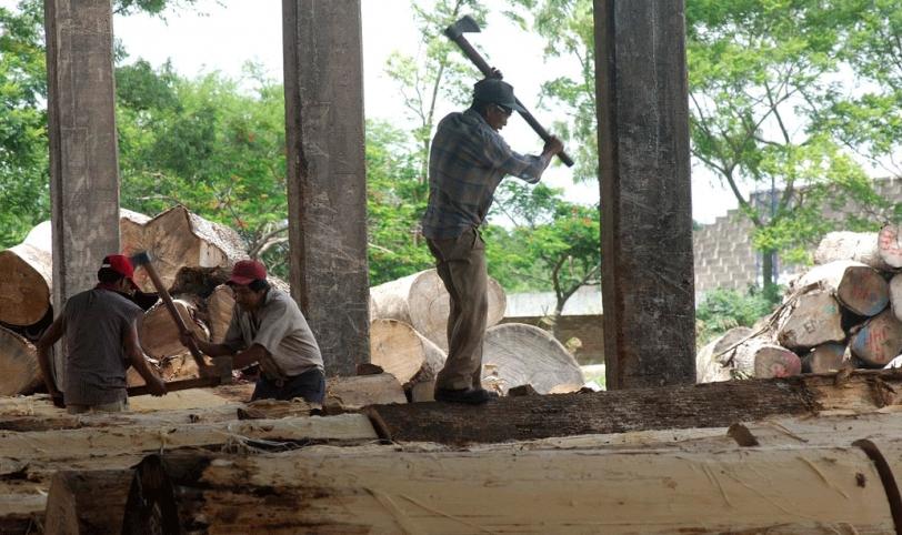 TRABAJO. El sector forestal genera alrededor de 90 mil fuentes de empleos directos en Bolivia. Foto: La estrella del oriente