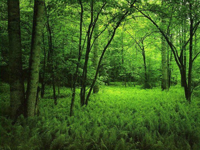 bosques-paraguay