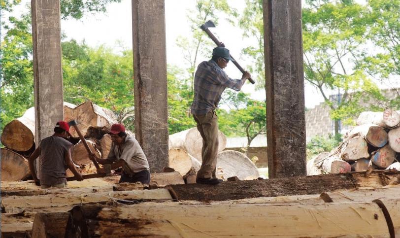 Pedro Colanzi, presidente de la Cámara Forestal de Bolivia (CFB), informó que las actividades de la zafra forestal 2017 arrancará en abril, proyectando llegar a producir más de 1,6 millones de metros cúbicos rola de madera, esperando llegar a producir una parte de los 10 millones de hectáreas que están bajo aprovechamiento forestal a nivel nacional. Foto: laestrelladeloriente.com